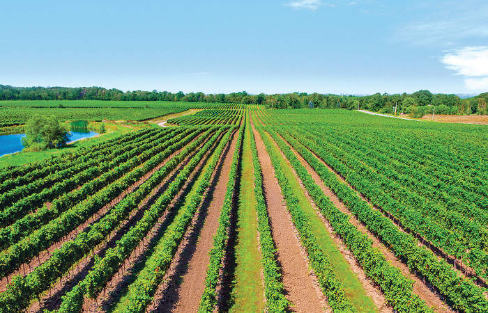 Culinary Quebec and Ontario Wine Country Tour